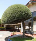 Hotel Vagabond Inn Glendale