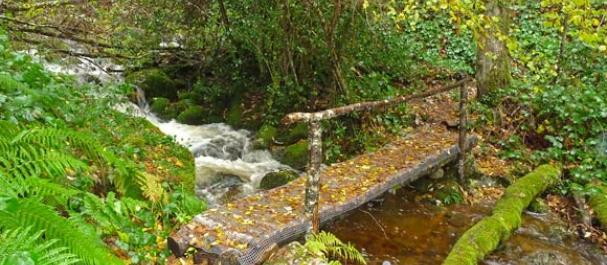Fotografía de Cangas de Narcea: Reserva Biológica Parque de Muniellos