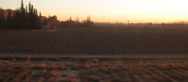 Fotografía de Argentina: Viñedos en Mendoza