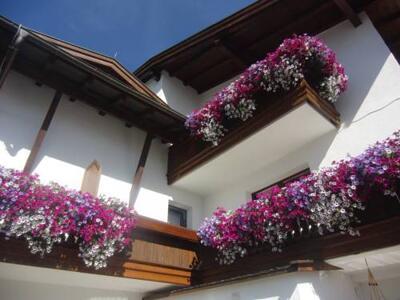 Bild - Hotel Garni Elfriede