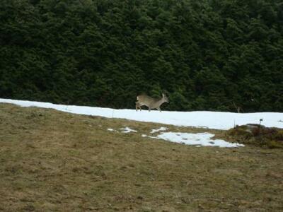 Bild - Le Caribou