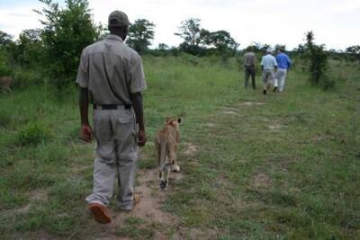 Foto generica Aha The David Livingstone Safari Lodge & Spa