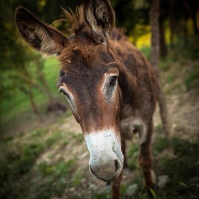 Foto generica Farm Stay Agriturismo La Luna