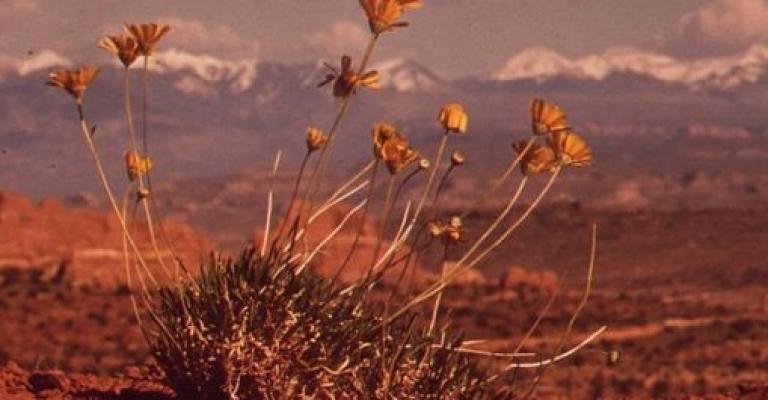 Foto von Moab: Moab