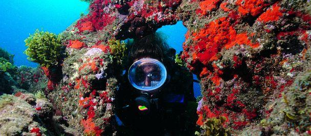 Fotografía de Gran Canaria Island: Submarinismo en la costa de Gran Canaria