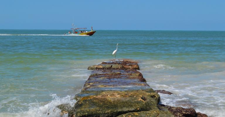 Photo Quintana Roo: Holbox