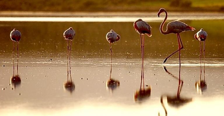 Fotografía de : Paraje natural Marismas del Río Palmones